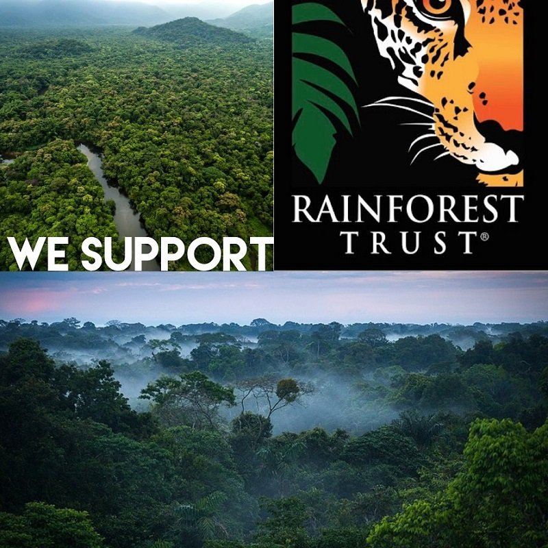 Collaboration with Rainforest